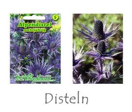 Disteln