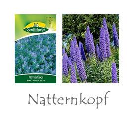 Natternkopf